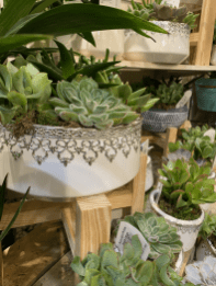 Displays filled with horticultural treasures (for all tastes!)
