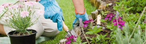 Welcome To The Garden Club Forum