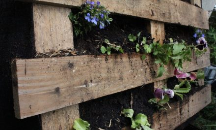 Vertical Gardens for growing in Small Spaces