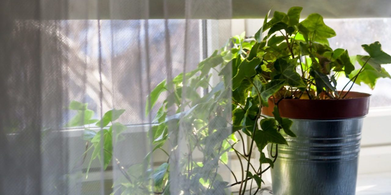 Supplemental lighting and Partially Sunny Windows