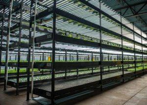 aquaponic farming