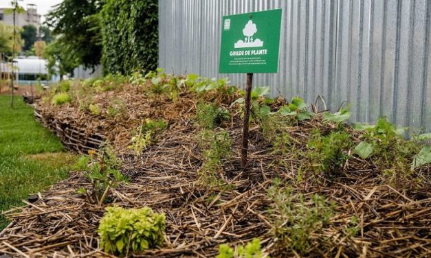 Retail Chain Builds Community Garden Network