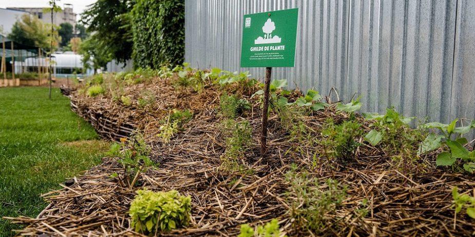 Retail Chain Builds Community Garden Network