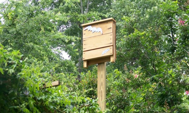 Bat Houses: A Natural Mosquito Control Method?