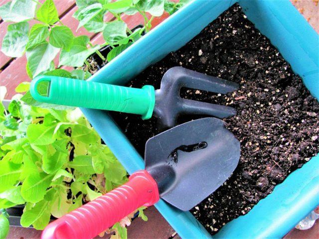 Healthy Crops in Pots
