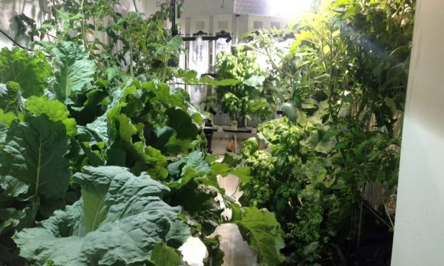 Diary of an Indoor Grower: Hydroponics Garden Evolution