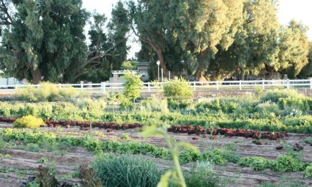 Agrihoods: Back to the Soil?