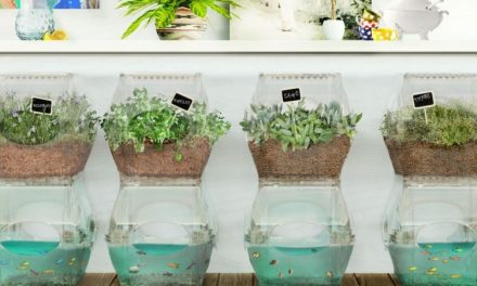 Aqualibrium: Sleek Urban Aquaponics Garden