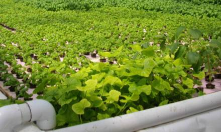 Aquaponics and Urban Farming Has Friends in High Places