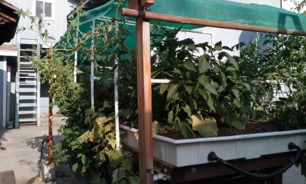 Aquaponics: Sustainable Food Security