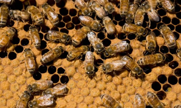 Neonic Pesticides Lawsuit: Canadian Beekeepers Seek Damages