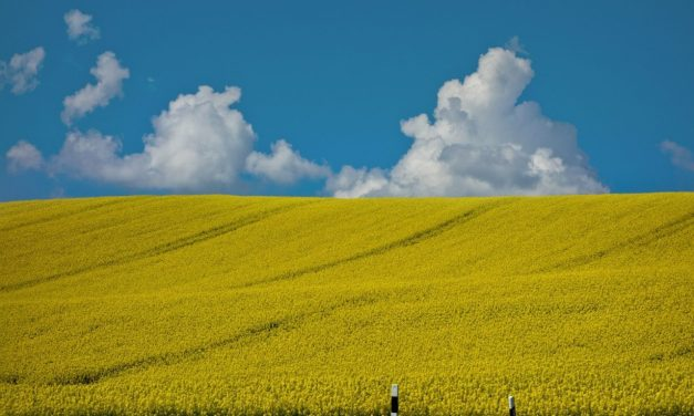 GMO Food Company Has Verified Non-GMO Foods?
