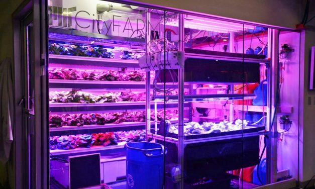 Vertical Farming Hits the Big Box