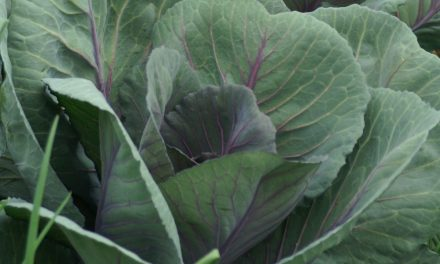 Compost: Making Super Garden Soil
