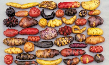 Good Food & Genetic Diversity