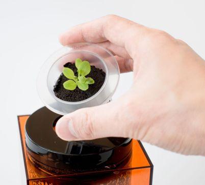 hydroponic pots