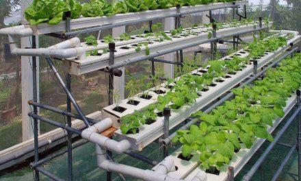 Indoor Garden Efficiency