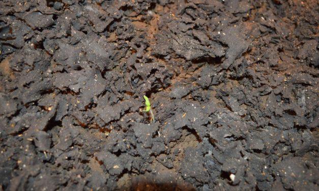 Fake Mars Soil Grows Safe Food?