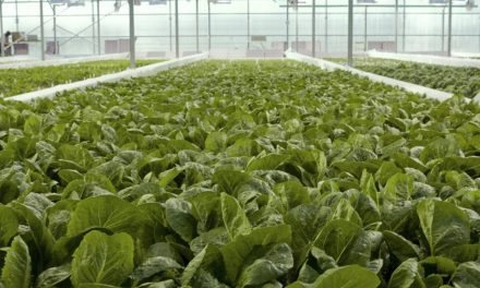 Sustainable Hydroponics