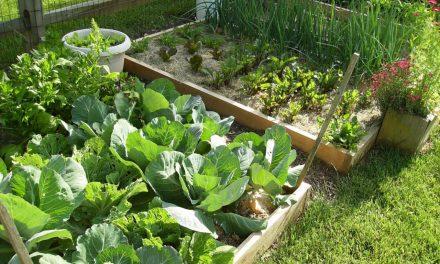 Better Garden Nutrients = Better Harvests