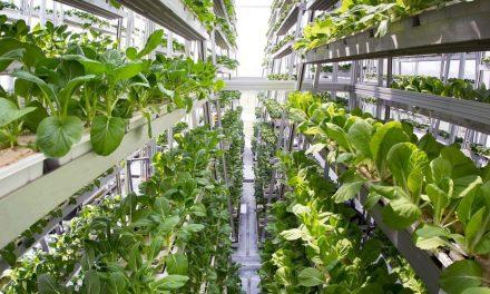 Award-Winning Vertical Farming System