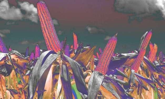 Monsanto's New Power Grab