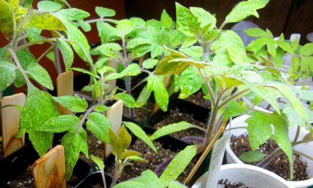 10 Tips for Better Indoor Garden Control