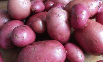 How To Grow Better Potatoes