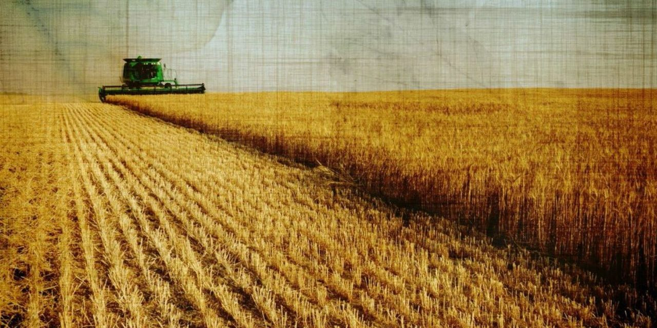 Why We Have A Food System