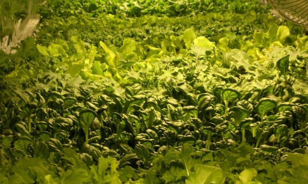 Vertical Farming Arrives in Newark, NJ
