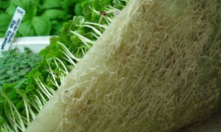 Compostable Hydroponic Media