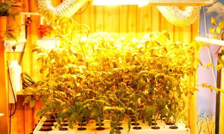 4 Ways to Get More from Grow Lights