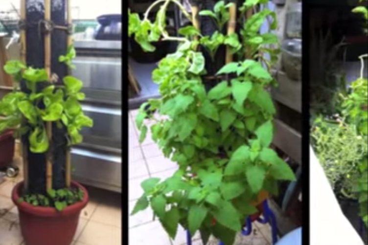 Vertical Garden On A Slim Budget