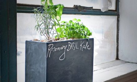 Modern Sprout: Sustainable Windowsill Hydro Gardening