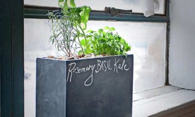 Modern Sprout: Sustainable Windowsill Hydro Gardening