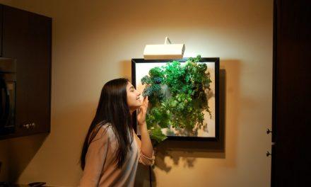 Edible Art: Aeroponic Wall Garden