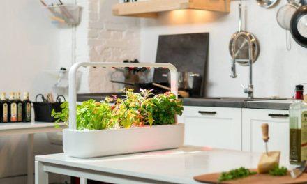 meet oasis mini smart garden system. Black Bedroom Furniture Sets. Home Design Ideas
