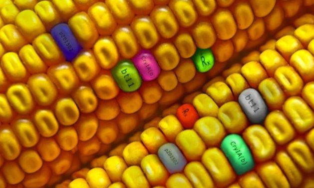 New GMO Wave
