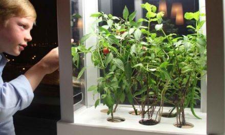 Meet NIWA: New Micro Hydroponic Garden