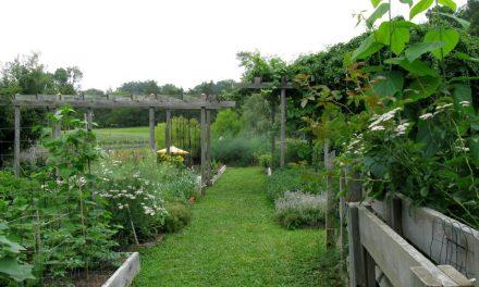 Organic Farm Contest: Winner Takes All