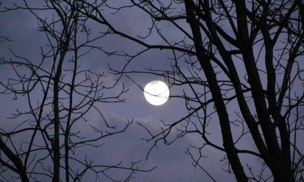 The Planting by the Moon Myth