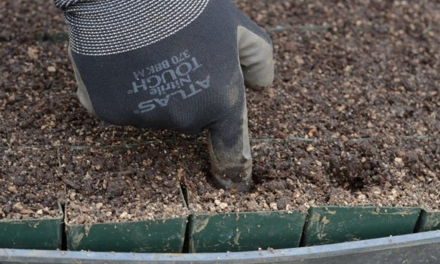 Is Reusing Potting Soil A Good Idea?