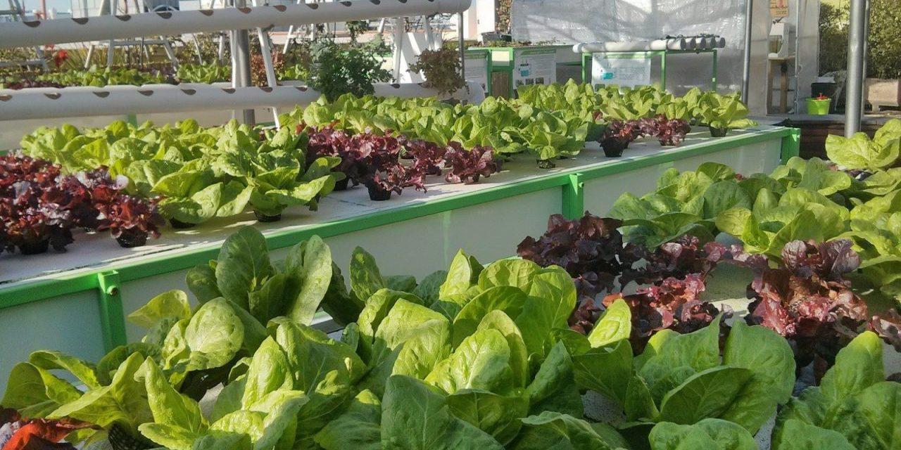 Rooftop Hydroponic Farming in Tel Aviv