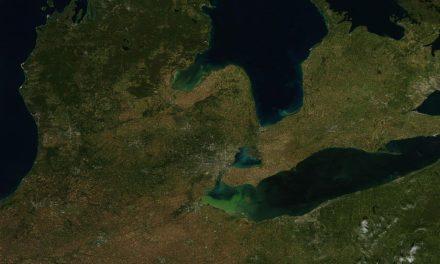 Roundup: Toxic Algae Feed