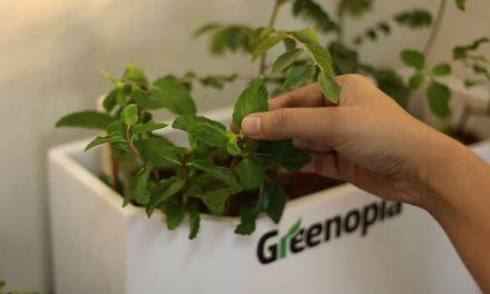 Greenopia: Smart Gardening In India