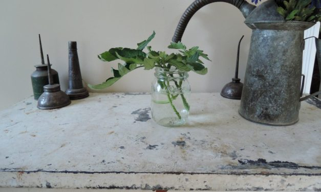 Best Way to Clone Tomato Plants?