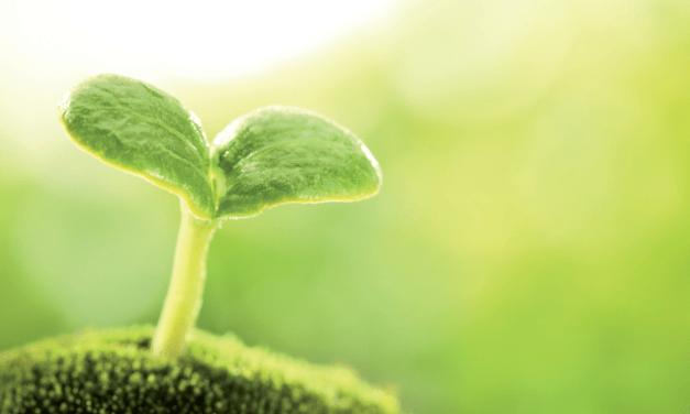Garden Indoors: A Good Start