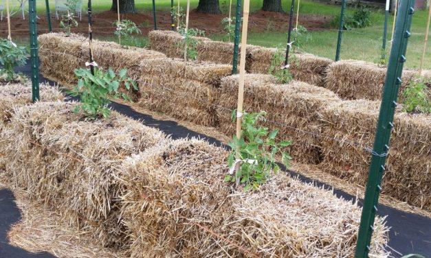 Straw Bale Garden: Take 2, Scene 1