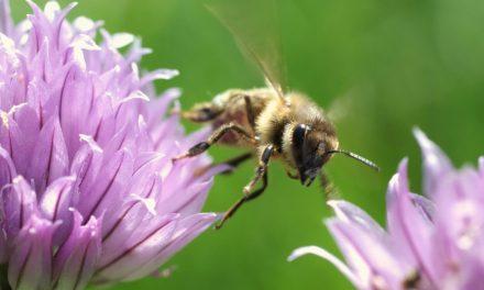 New Honey Bee Killer Identified