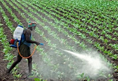 UN Proves Agricultural Pesticides Hazardous